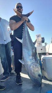 Bluefin Tuna — Alexandre Cassin
