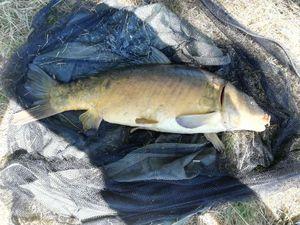 Mirror Carp — cool fishing 86