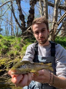 Brown Trout — Victor Damin