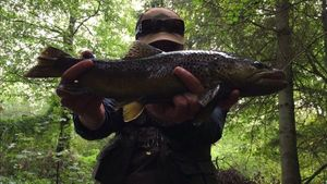 Brown Trout — Martin Maquet