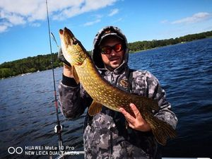 Northern Pike — Peanut's Team Small  Pike Medoc