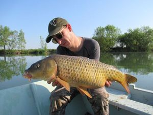 Common Carp — James O'rourke