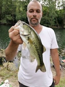 Largemouth Bass — Nicolas Pannetier