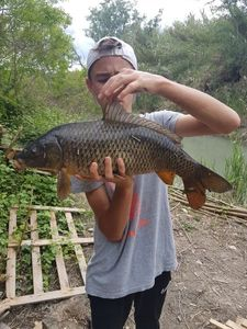 Common Carp — Nathan Bres