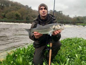 European Bass (Seabass) — Fanatick Fisher