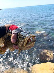 Brown Grouper — Philippe Attias