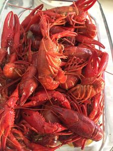 Spinycheek Crayfish — Maryvonne Olivier
