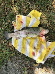 Common Trout — Louis Durand
