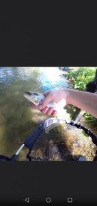 Brown Trout — Valentin FishingBuffs