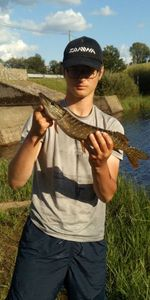 Northern Pike — Merlin Bourgarel