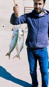 Bluefish — Jamal Eddine Bourazza