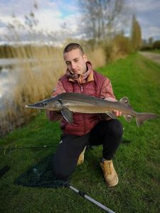 Sturgeon — Nicolas flyfishing