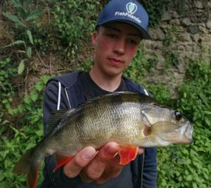 European Perch — Matthieu VOLANT