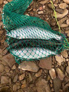 Red-Spotted Masu Salmon — Владимир Суколенко