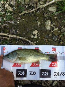 Smallmouth Bass — Vince Tp