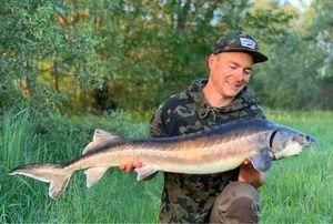 Sturgeon — Thieumas Carp Angler