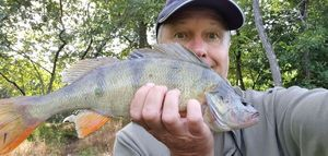 European Perch — Philippe GODLEWSKI