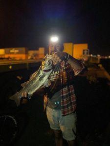 European Bass — Nanouk Lesquimal