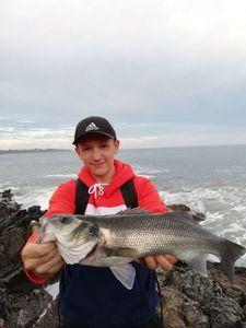 European Bass (Seabass) — Erwann Thn