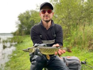 Northern Pike — Steeve 59