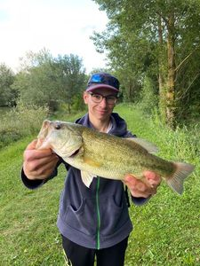 Largemouth Bass — Valentin 1