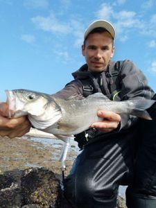 European Bass (Seabass) — surfcasting lx
