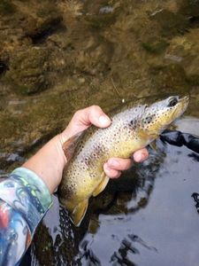 Common Trout — Théo Lauga