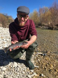 Rainbow Trout — Alexandre Chauvet