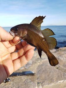 Corb — Ben Benito Rockfishing