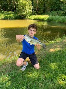 Largemouth Bass — Paul CHESNEAU