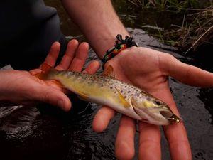 Brown Trout — Clément à la pêche