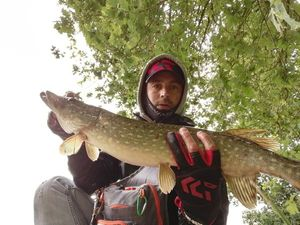 Northern Pike — Rulio Pa-Iglesias