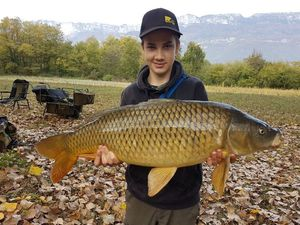 Common Carp — Jack Williams