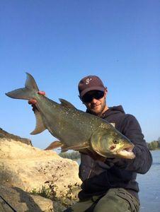 Asp — Hugo Fishing