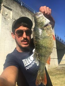 European Perch — dod$ale fishing