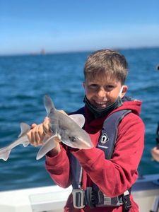 Starry Smooth-Hound — Aventure Pêche Bretagne APB