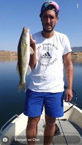 Sandre — dod$ale fishing