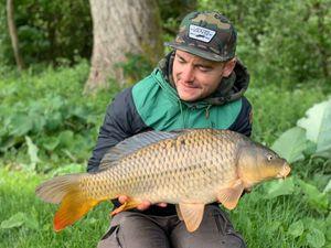 Common Carp — Thieumas Carp Angler