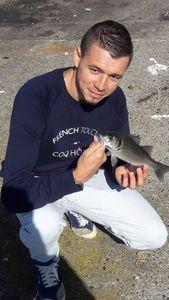 European Bass (Seabass) — Fabien Lefrançois