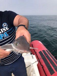 Tope Shark — Ilane Sasportas