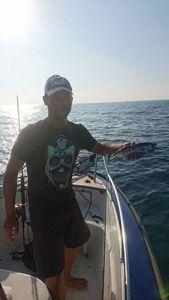 Southern Bluefin Tuna — Julien Bueb