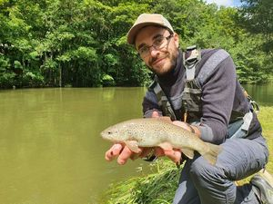 Brown Trout — Thomas Heuzey