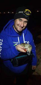 Common Cuttlefish — Les Bredouilleurs