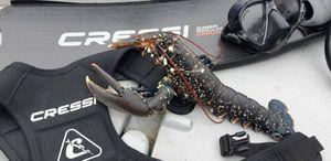 European Lobster — Raph CSMPêche