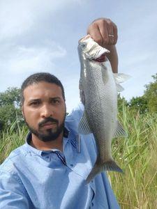 European Bass — Kenichi Hajime no Fishing