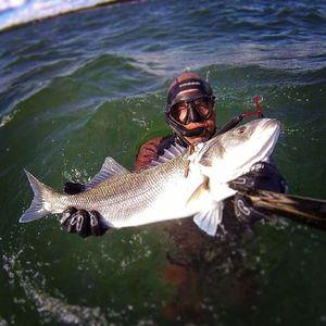 European Bass (Seabass) — Raph CSMPêche