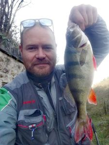 European Perch — Michael Belfond
