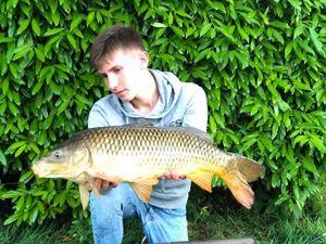 Common Carp — Tristan Marquant