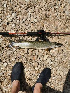 Northern Pike — Kasynys Fishing