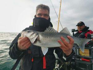 European Bass — seabass manu